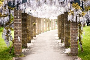 Unsplash_Flower Road_YkVmQ2c